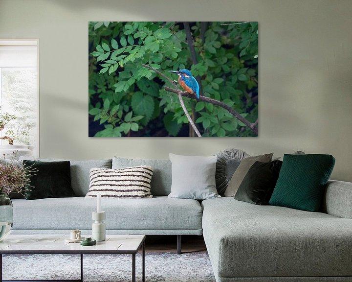 Beispiel: Der Eisvogel von Merijn Loch