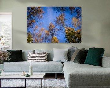 Sky-High Golden Trees van Urban Photo Lab
