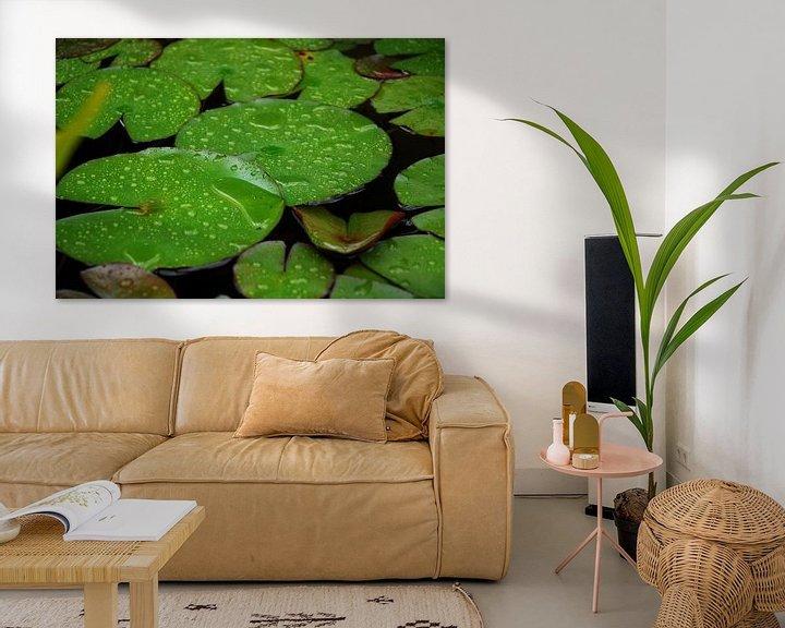 Impression: Waterlelies sur Laurent Scheffer