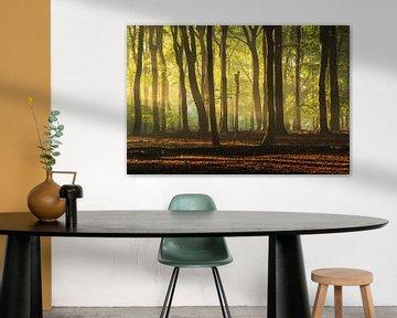 Lichtstralen Veluwe beuken bos