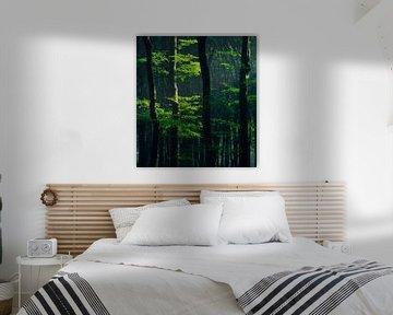 Frühlingsgrün in einem Buchenwald von Rick Kloekke