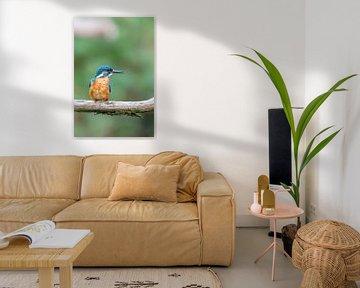IJsvogel (Alcedo atthis) van Dirk Rüter