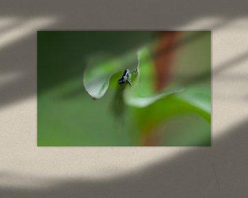 Libelle von Esther Erkelens
