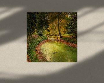 Herfst in het Slochterbos van Henk Meijer Photography