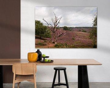 Heide-Landschaft der Posbank bei Rheden mit blühender Heide von Robin Verhoef