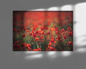 Symfonie in het rood van Regina Steudte   photoGina