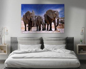 Namibië Olifanten van W. Woyke