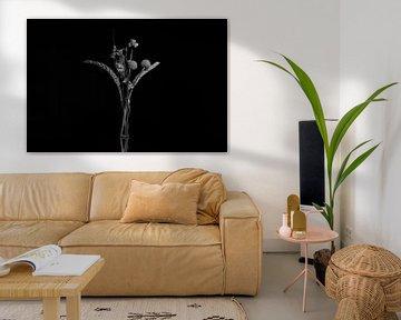 Blumen tiefgestelltes schwarz-weißes Stilleben von Fotografie Sybrandy