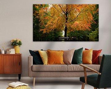 Warme herfst kleuren van Sran Vld Fotografie