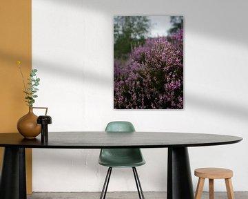 Sommerliches lila Heidekraut von Inez VAN DE WEYER