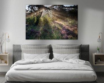 dramatische Sonneneinstrahlung in nebligem Wald mit Heideblumen im Sommer von Olha Rohulya