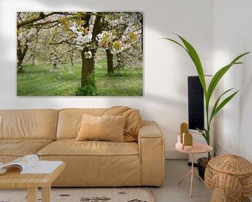 Alter Apfelblüten-Obstgarten im Frühling Betuwe von My Footprints