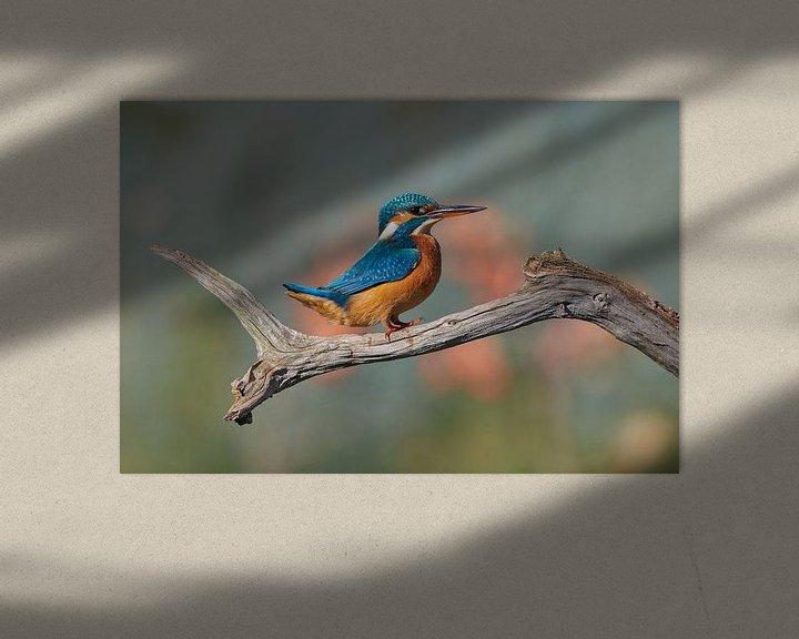Beispiel: Eisvogel von IJsvogels.nl - Corné van Oosterhout