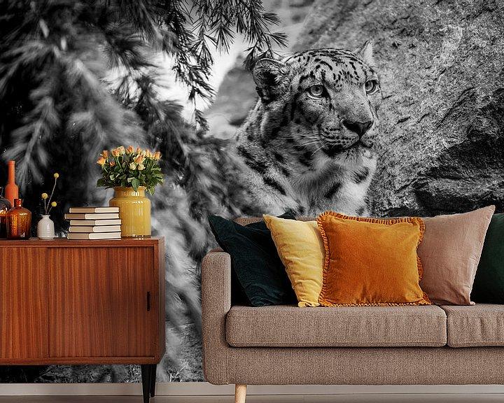 Beispiel fototapete: Gepard von Stephan Zaun