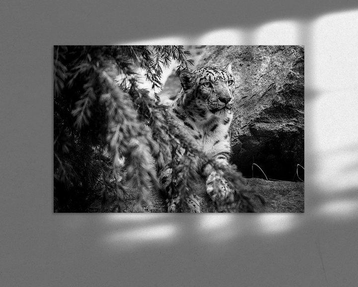 Beispiel: Gepard von Stephan Zaun