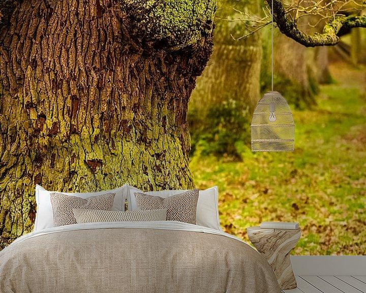 Beispiel fototapete: Baumallee von Stephan Zaun