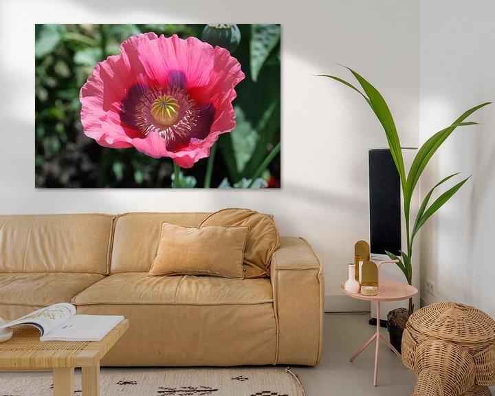 Beispiel: A single poppy in full bloom. von Leendert Moerland