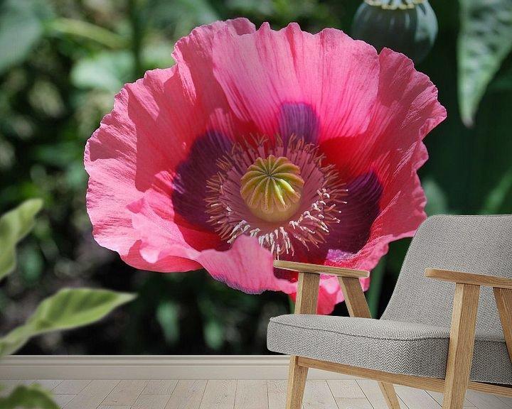 Beispiel fototapete: A single poppy in full bloom. von Leendert Moerland