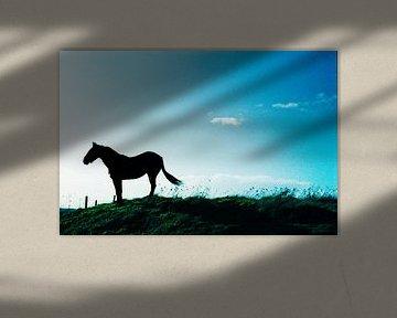 Tophit horse on hill van Ron ter Schegget