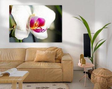 Blühende Orchidee von Angelique van Kreij