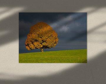 Herbstlicher Baum vor Gewitterstimmung