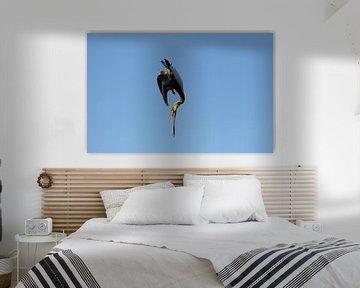 Artist In The Sky - Himmelsartist von Christiane Schulze