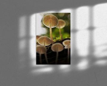 Pilz von unten! von Marvin Van Haasen