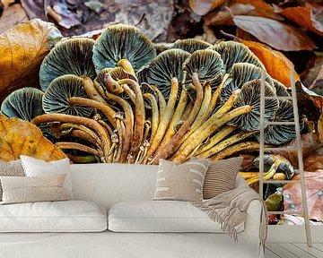 De omgewaaide bundel paddenstoelen... van Rob Smit
