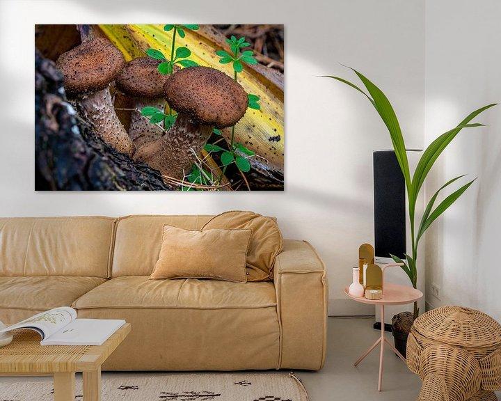 Sfeerimpressie: De sombere Honingzwam - Armillaria ostoyae van Rob Smit