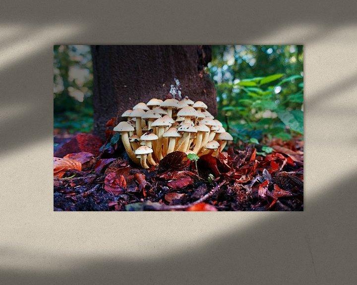 Sfeerimpressie: Groep kleine witte paddenstoelen in het herfstbos. van Wieland Teixeira