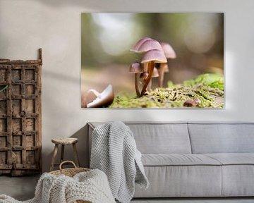 Herbstbild im Wald, mit Pilzen von KB Design & Photography (Karen Brouwer)