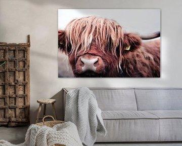 Portret van een stoere Schotse Hooglander koe rund stier van KB Design & Photography (Karen Brouwer)