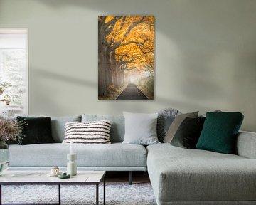 Herfst in Apeldoorn van Niels Barto