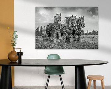 Chevaux de trait, noir et blanc sur Lisette van Peenen