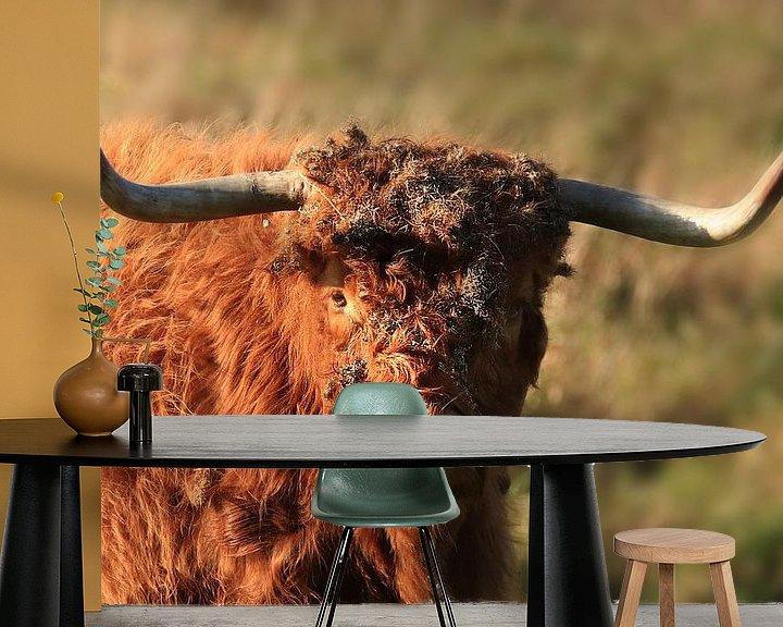 Impression: Vache Highlander écossaise sur Fotografie Sybrandy