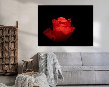 Rode Roos van Fowler Fotografie