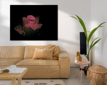 Surrealistische Rose von Fowler Fotografie