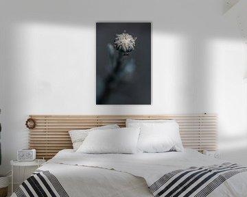 Blühende Blütenknospe in dunkler Atmosphäre von Roosmarijn Bruijns