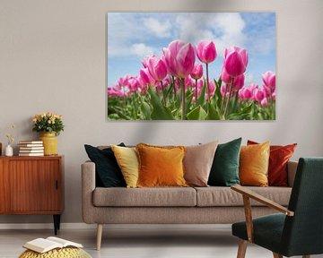 Rosa Tulpen auf dem Feld von Peter Heeling