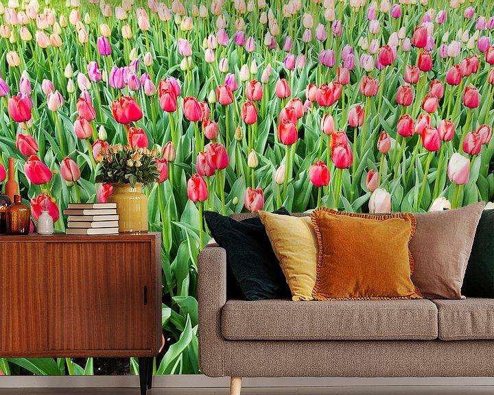 Sfeerimpressie behang: roze en   rode tulpen op de bollenvelden in de keukenhof van Compuinfoto .