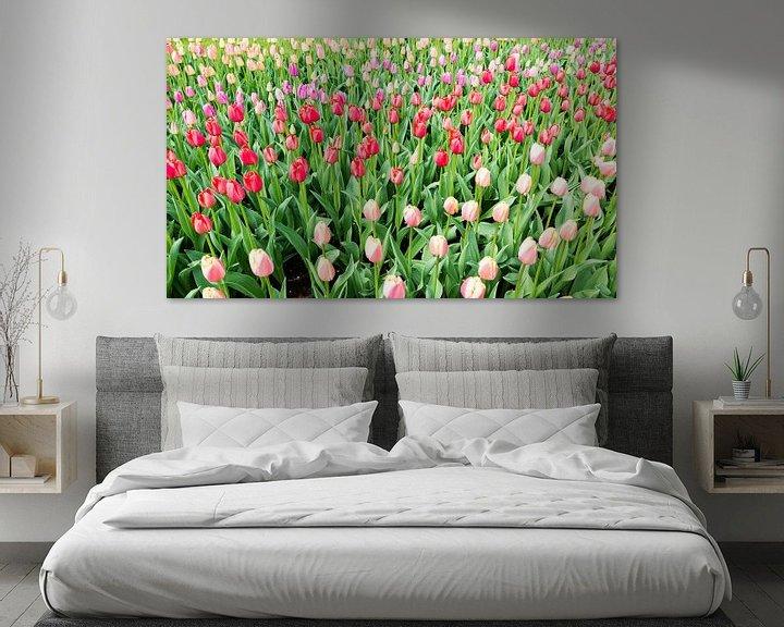 Sfeerimpressie: roze en   rode tulpen op de bollenvelden in de keukenhof van Compuinfoto .