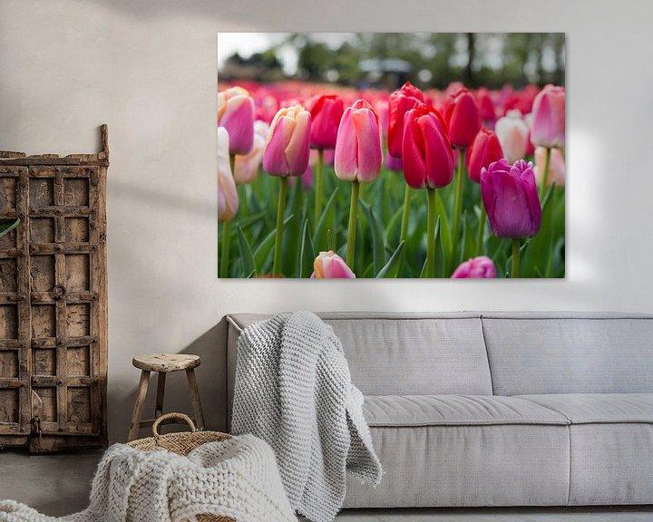 Sfeerimpressie: rode tulpen op de bollenvelden in de keukenhof van Compuinfoto .