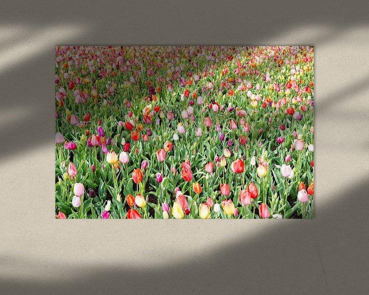 Sfeerimpressie: gele en rode tulpen op de bollenvelden in de keukenhof van Compuinfoto .