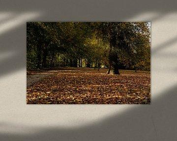 Herfst in Botanische tuin van Els Hattink