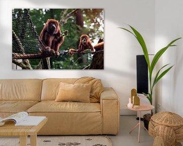 Moeder en baby aap van Jaleesa Koelen