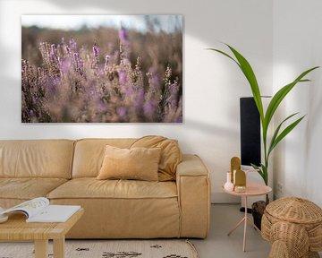 Heidekrautblüte von Alvin Aarnoutse