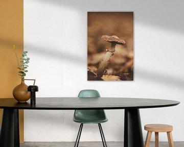 Bruine paddenstoel in vintage setting