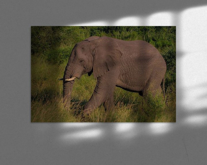 Beispiel: Gerissenes Südafrika von Wesley Klijnstra