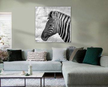 Zebra von Ger van Beek