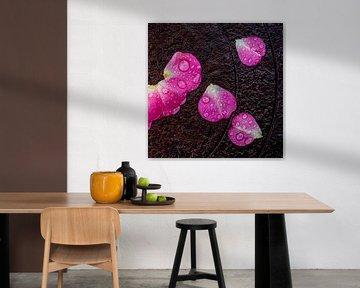 Roze bloemblaadjes met regendruppels